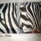 "Pure Art USA Patricia Hunter Print - Zebra 17 3/4"" X 11"""
