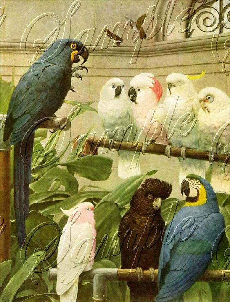 VINTAGE PARROTS MACCAW BIRDS AVIARY CANVAS ART PRINT