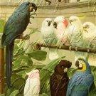 VINTAGE PARROTS MACCAW BIRDS AVIARY CANVAS ART PRINT
