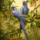 VINTAGE HYACINTH MACAWS BIRDS AVIARY CANVAS ART-BIG