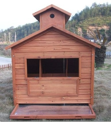 Chicken Coop With Internal Perches