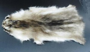 BLEACHED RACCOON PELT - NORTH AMERICAN NATURAL PIECE
