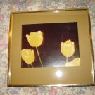Vintage Framed Yellow Tulips Original Photograph 1977