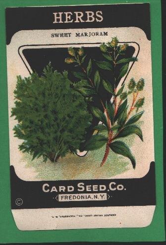 1920's Card seed Company seed packet Sweet Marjoram