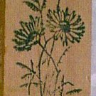 Daisy Flowers open and budding  Rubber Stamp wildflowers tall