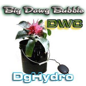 Big Dawg Bubble***DWC***Hydroponic System