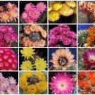 Lobivia variety MIX @@ cacti rare cactus seed 100 SEEDS