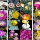 Mesembs MIX succulent cactus living stone seed 30 SEEDS