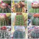 Melocactus MIX exotic cacti rare cactus seed 1000 SEEDS