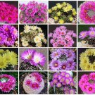 Mammillaria MIX @ pincushion rare cactus seed 300 SEEDS