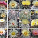 Astrophytum Variety MIX, rare cactus seed lot 100 SEEDS
