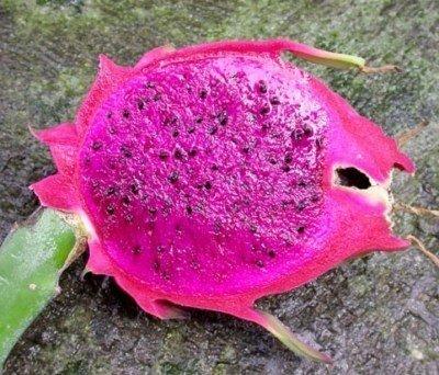 Dragon fruit purple pitaya GOOD exotic seed 500 seeds P