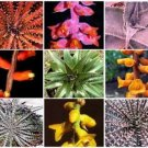 Dyckia VARIETY MIX @J@ exotic succulent hetchia cacti xeriscaping seed 100 SEEDS