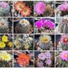 Cactus variety mix rare globular columnar garden cacti seed succulents 100 seeds