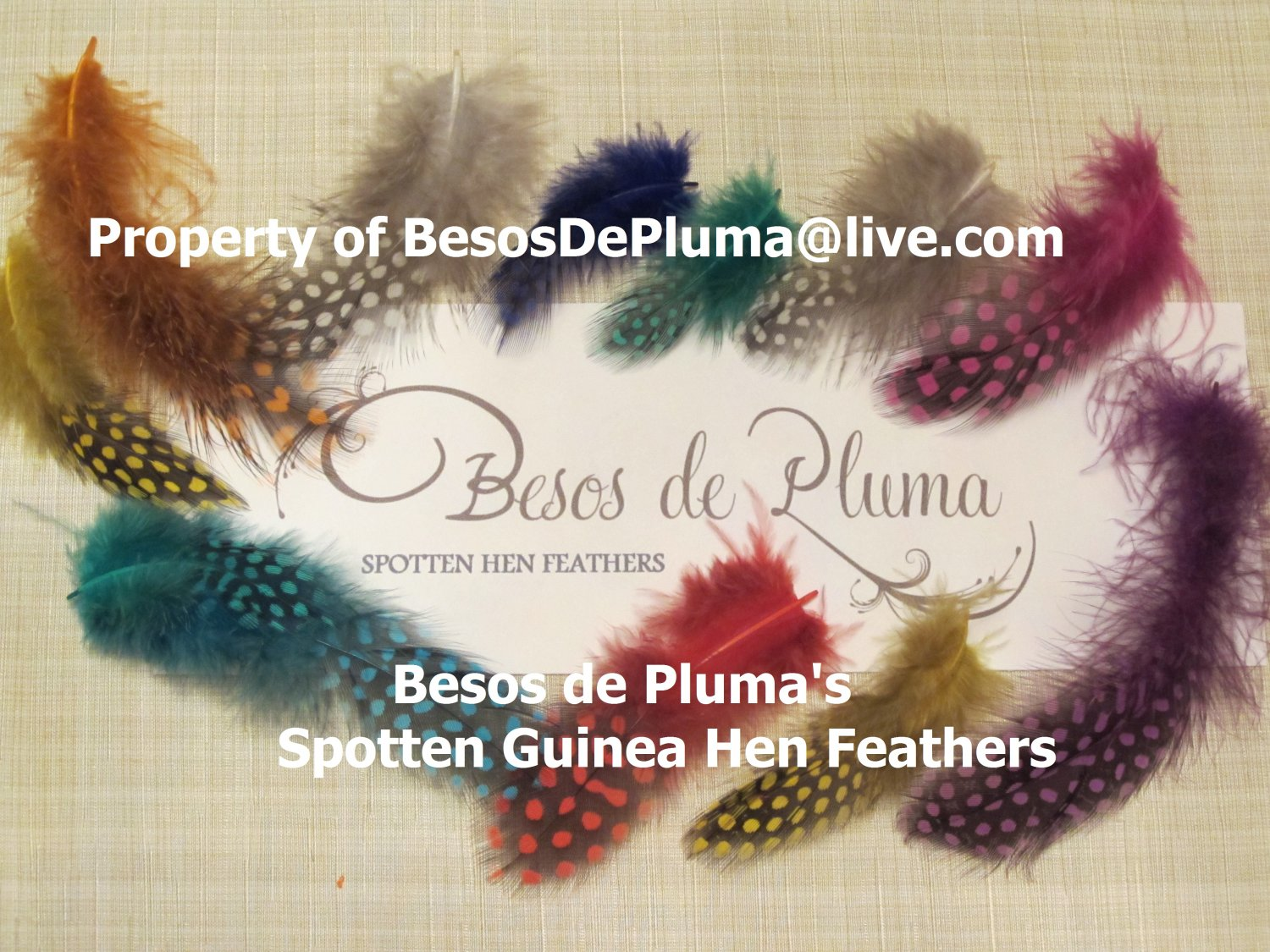 5 for $8! SPOTTED GUINEA HEN FEATHERS for Hair Extensions pink-blue-green-orange-purple SHORT hair