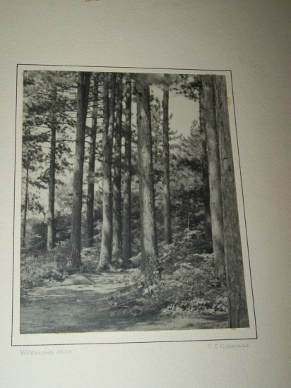 Vintage 1940s Woodland Path Forrest Photograph Photo