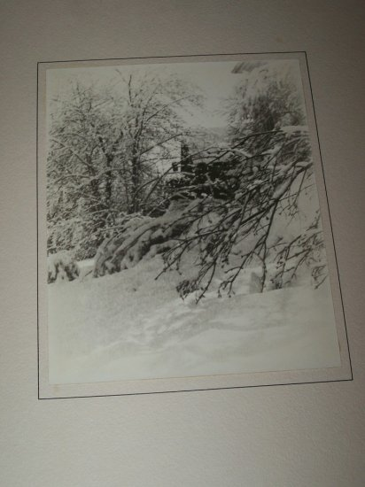 Vintage 1940s Winter Snow Branches Ice Photograph Photo