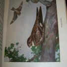 Antique 1916 A YEAR WITH THE BIRDS Alice Ball Color Illustrated Plate Book
