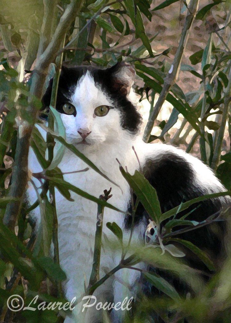 Cat ACEO