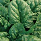 Bloomsdale Spinach 40 seeds