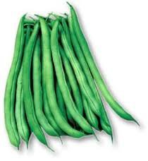 Blue Lake Bush Beans 25 Heirloom seeds