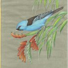 Blue Dacnis Bird Painting Rare Indian Miniature Wild Life Nature Handmade Art
