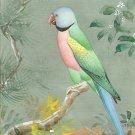 Indian Miniature Painting Handmade Red Breasted Parakeet Bird Watercolor Art