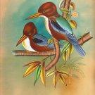Kingfisher Bird Art Handmade Indian Miniature Ornithological Nature Painting