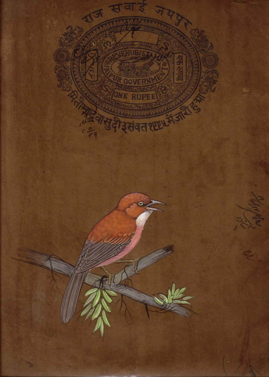 Indian Bird Miniature Painting Handmade Old Stamp Paper Watercolor Nature Art