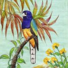 Indian Miniature Wild Life Nature Bird Art Handmade White Tailed Trogon Painting