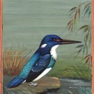 Blue Banded Kingfisher Painting Handmade Indian Miniature Wild Life Nature Art
