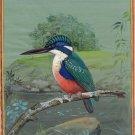 Half Collared Kingfisher Art Handmade Indian Miniature Bird Nature Painting