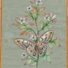 Indian Painting Handmade Butterfly Watercolor Miniature Nature Wild Life Art