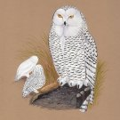 Snowy White Owl Painting Handmade Indian Bird Miniature Decor Nature Ethnic Art