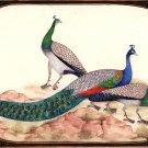 Peafowl Peacock Indian Art Handmade Miniature Nature Bird of Paradise Painting