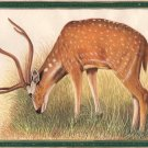 Indian Deer Painting Hand Painted Charming Wildlife Ethnic Animal Nature Art