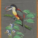 Curl Crested Aracari Painting Handmade Indian Miniature South American Bird Art