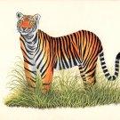 Royal Bengal Tiger Handmade Art Grand Indian Miniature Wild Cat Animal Painting