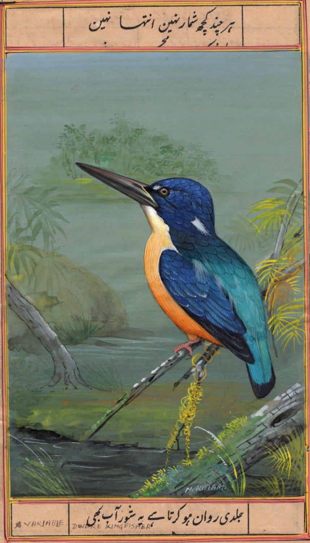 Indian Miniature Bird Art Handmade Variable Dwarf Kingfisher Wild Life Painting