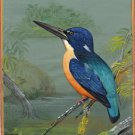 Indian Miniature Bird Art Handmade Variable Dwarf Kingfisher Wild Life Painting