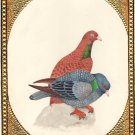 Indian Pigeon Bird of Paradise Art Handmade Miniature Watercolor Ornithology Art