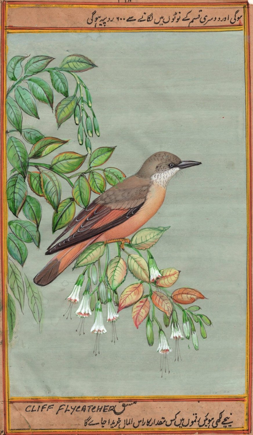 Cliff Flycatcher Bird Painting Handmade Indian Miniature Ornithology Nature Art