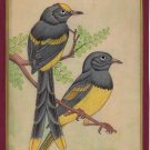 Indian Bird of Paradise Miniature Painting Handmade Wild Life Ornithology Art