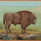 American Bison Buffalo Painting Rare Handmade Wild Animal Indian Miniature Art