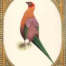 Original Handmade Indian Long Tail Bird Miniature Watercolor Ornithology Artwork