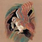 Barn Owl Bird Painting Handmade Watercolor Indian Ornithology Nature Art 9″X12″