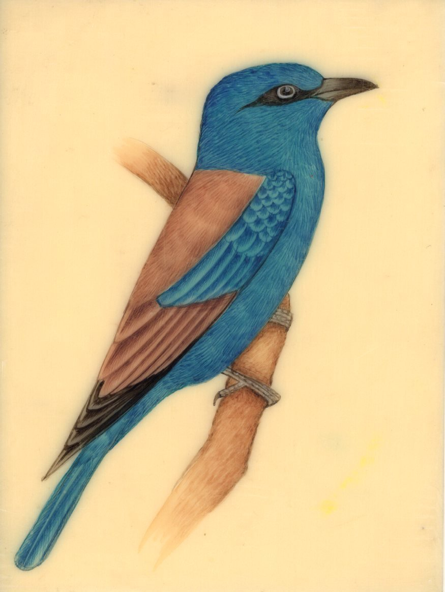 Blue Jay Miniature Painting Handmade Indian Bird Watercolor Nature Decor Artwork