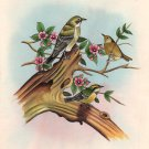 Sparrow Bird Miniature Painting Handmade Watercolor Paper Ethnic Folk India Art