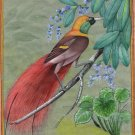 Count Raggi Bird of Paradise Painting Rare Handmade Indian Miniature Nature Art
