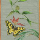 Indian Butterfly Painting Handmade Watercolor Miniature Nature Wild Life Art